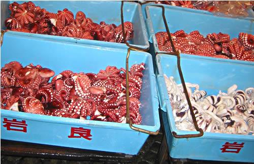 octopus_goodness. (56k image)